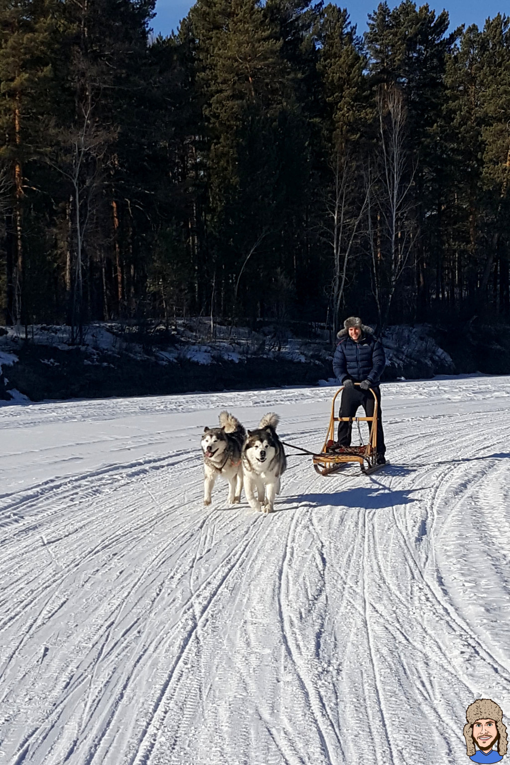 Schwabski beim Hundeschlitten fahren mit 2 Malamuten