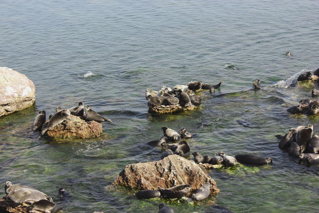 Baikalrobben auf den Uschkany Inseln